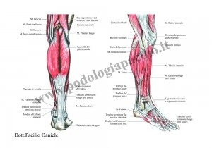 anatomia del piede: muscoli